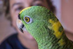 Попугай смотря до одна сторона стоковое фото