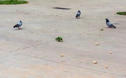 Попугай среди голубей стоковая фотография