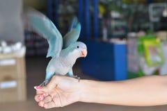 Попугай Стоковое Фото