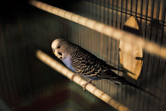 Попугай Стоковые Изображения RF