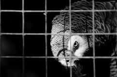 Попугай Стоковые Фотографии RF
