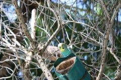 Попугай Стоковое фото RF