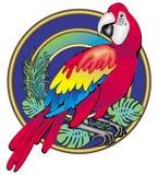 Попугай бесплатная иллюстрация