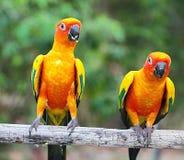 Попугай Стоковые Изображения