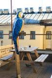 Попугай Picknick стоковое фото rf