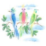 3 попугая на ветви на предпосылке голубых облаков Стоковая Фотография