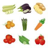 Популярный комплект вектора овощей, иллюстрация иллюстрация штока