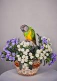 Попыгай и цветки стоковые фото