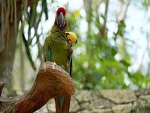 попыгай парка Индонесии ветви птиц bali попыгай парка Индонесии ветви птиц bali стоковая фотография rf