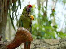 попыгай парка Индонесии ветви птиц bali попыгай парка Индонесии ветви птиц bali стоковая фотография