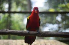 попыгай парка Индонесии ветви птиц bali Стоковые Фотографии RF