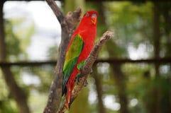попыгай парка Индонесии ветви птиц bali Стоковая Фотография RF