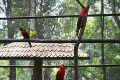 попыгай парка Индонесии ветви птиц bali Стоковые Изображения