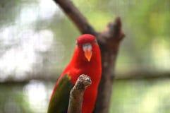 попыгай парка Индонесии ветви птиц bali Стоковое фото RF