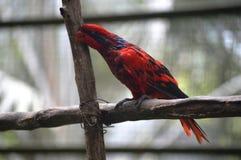 попыгай парка Индонесии ветви птиц bali Стоковые Изображения RF