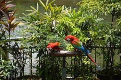 попыгай парка Индонесии ветви птиц bali Стоковое Изображение RF