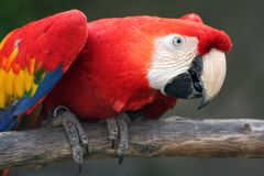 попыгай птицы близкий вверх стоковое изображение rf