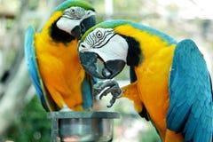 попыгай птицы цветастый стоковая фотография rf