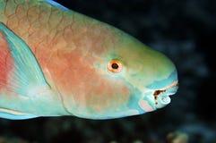 попыгай рыб стоковое изображение rf
