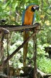 попыгай macaw стоковая фотография rf