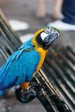 Попыгай Macaw стоковое изображение rf