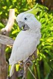 Попыгай Macaw стоковое изображение
