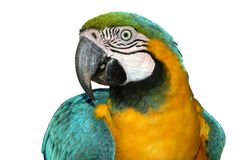 попыгай macaw Стоковые Изображения RF
