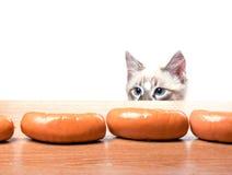 Попытки кота для того чтобы украсть сосиску стоковое изображение