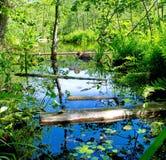 Поплавок журналов в реке леса стоковые фотографии rf