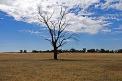 пораженная засуха Стоковое Изображение