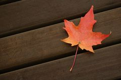 Поразительный красный цвет Стоковая Фотография
