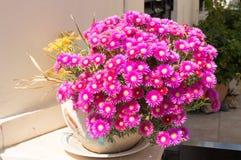 Поразительные розовые (magenta) цветки Стоковые Фото