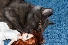 Порода котенка великобританская играя с девушкой куклы на голубом кресле Смешная сторона кота стоковые фото