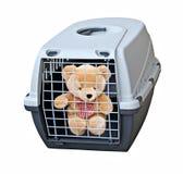Порочный проарретированный медведь Стоковая Фотография RF