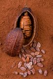 порошок плодоовощ какао 3d Стоковая Фотография RF