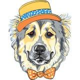 Порода собаки чабана собаки вектора кавказская в шляпе и бабочке Стоковое Изображение