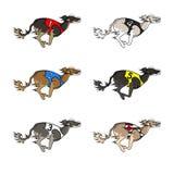 Порода saluki идущей собаки Стоковая Фотография RF
