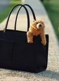 портмоне медведя Стоковая Фотография