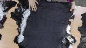 Портной проверяет качество меха на коже для пригодности для шить пальто видеоматериал