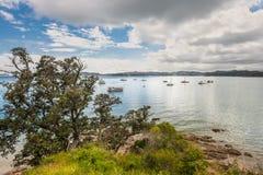 Портовый район на Paihia, заливе островов, Новой Зеландии Стоковая Фотография