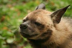 Портреты животных стоковое фото rf