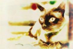 Портреты кота Стоковые Фото