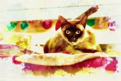 Портреты кота Стоковая Фотография RF