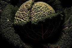Портреты овощей - зеленого объекта искусства стоковые изображения