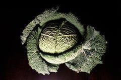 Портреты овощей - зеленого объекта искусства стоковое фото