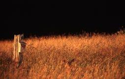 портреты Орегона стоковое фото rf
