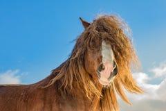 Портрет агара, богемской-Moravian бельгийской лошади в солнечном дне взгляд городка республики cesky чехословакского krumlov сред стоковые фотографии rf