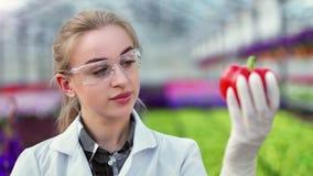 Портрет аграрной женщины ученого инженера впрыскивая сладкий перец для анализировать акции видеоматериалы