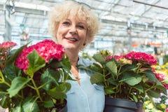 Портрет активной старшей женщины держа 2 в горшке орнаментальных завода Стоковые Фото