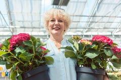 Портрет активной старшей женщины держа в горшке ornamental 2 Стоковое Изображение